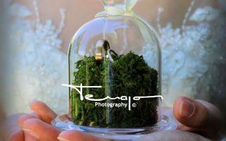 TERRAPON Photography