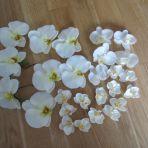 fausses orchidées blanches