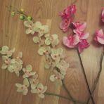 tiges de fausses orchidées 3.-/tige